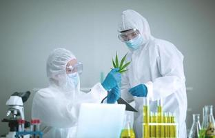 Researching marijuana or cannabis photo