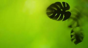 Beautiful nature view of green leaf photo