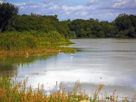 Flooded meadows and little egrets at Wheldrake Ings North Yorkshire England photo