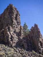 Canarian pine tree growing amongst rock outcrops at Roques de Garcia Tenerife Canary Islands photo