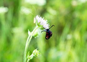 mariposa en una flor foto