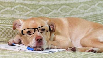 hombre de negocios, perro labrador, acostado, en la cama video