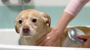 un perro bañándose video