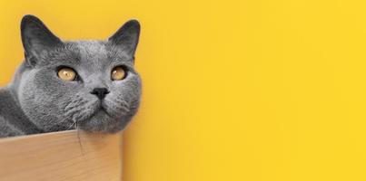 Cat on yellow background photo