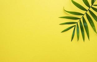 Palm leaves on yellow background photo