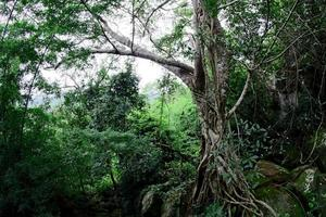 Pha Luang Waterfall Forest Park, Amphoe Si Mueang Mai, Ubon Ratchathani, Thailand photo