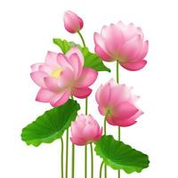 Realistic Bunch Lotus Flowers Vector Illustration