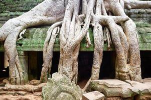 Ta Prohm Temple in Siem Reap, Cambodia photo