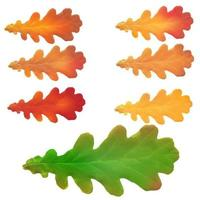 Oak leaves isolated on a white background vector