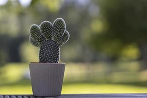 Cactus in the white pot on blurry yellow backgrounds photo
