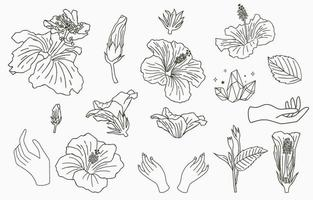 colección de flores de línea con hibisco vector