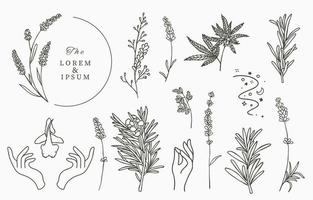Line herbal collection with rosemary vector