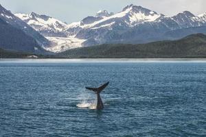 Bebé ballena jorobada y paisaje de Alaska con glaciar foto
