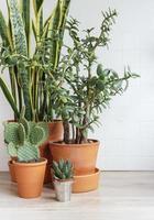 Cactus sansevieria house plants photo