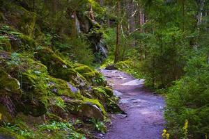 Path in the woods of Tyrol photo