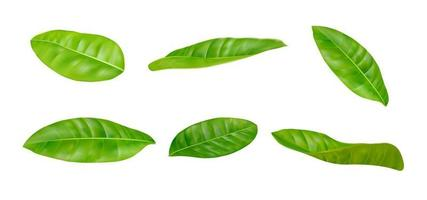 Realistic leaves set vector