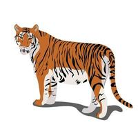 Tiger standing vector illustration in flat style clipart