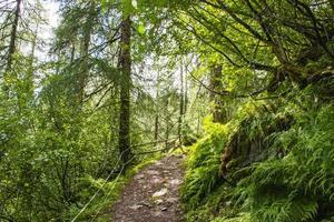 camino a través de los bosques alpinos de solden foto