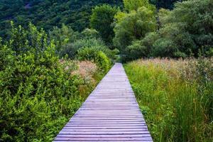 Walkway between the reeds photo