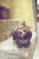 gato hambriento en vernazza foto