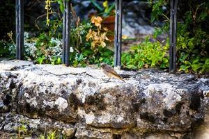Little bird on the stone edge photo