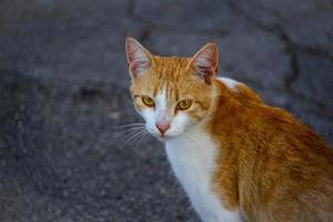 Close-up of a red and white cat on the street photo