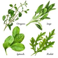 Realistic Herbs And Spices Set Vector Illustration