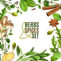 Herbs Realistic Frame Vector Illustration