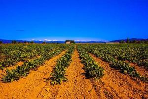 cultivos y cielo azul foto