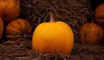 Big orange fresh pumpkin on hay photo
