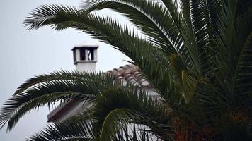 feuilles de palmier bougeant avec le vent video