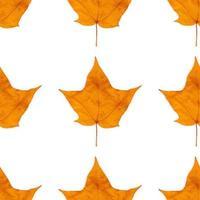 Autumn maple leaves seamless background photo