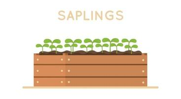 Saplings in wooden box Vector design