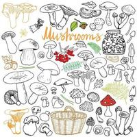 Mushrooms sketch doodles hand drawn set Different types of edible and non edible mushrooms Vector icons on white background