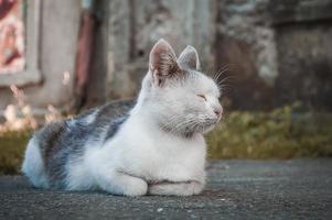 White and gray cat sleep photo
