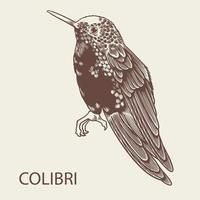 vector dibujado a mano ilustración de pájaro colibri