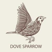 Hand drawn sketch of Dove Sparrow bird vector isolated
