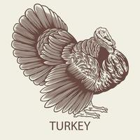 Old retro turkey hand drawn picture with a poultry vector