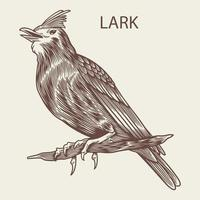 Lark bird hand drawn in vintage style vector