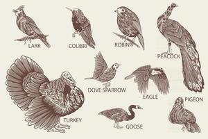 especies de aves dibujadas a mano en estilo vintage vector