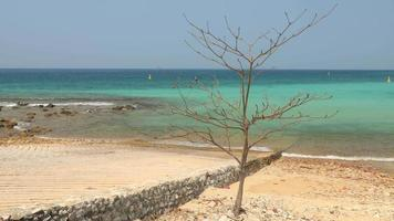 Time-lapse of a tree on a sandy beach and beautiful sea at sunny day video