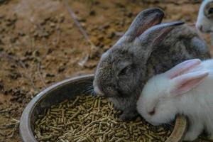 rabbit bunny easter photo