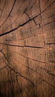 Textura de madera vertical de tronco de árbol cortado foto