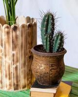 Cactus echinocereus en maceta de metal foto