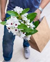 Flor de orquídea blanca dendrobium nobile en bolsa de compras foto