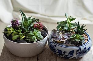 Terrarium plants in pot with cactus succulent close up photo