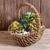 Terrarium plant in basket with wooden background photo
