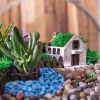 Terrarium plant decor home close up photo