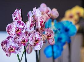 Coloridas orquídeas phalaenopsis polilla en la olla de orquídeas pintadas de cerca foto