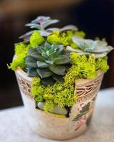 Creative terrarium plant in the vintage moss pot photo
